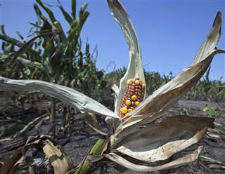 Drought Crop Losses