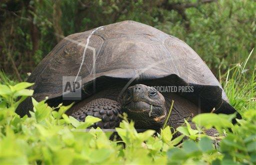 Ecuador New Giant Tortoise