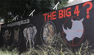 South Africa Rhino Campaigns 