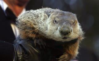 Ron Ploucha, Punxsutawney Phil