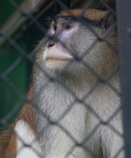 Monkey Killed Zoo Break In