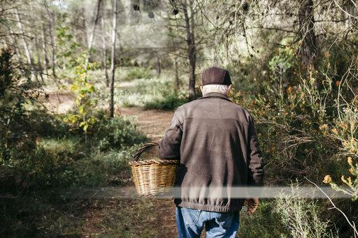 Senior man looking for mushrooms in the forest