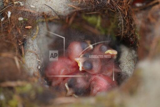 CHINA YUNNAN BUILDING HOUSES FOR BIRDS PHD CANDIDATE