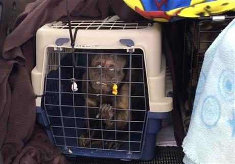 South Africa Monkeys Rescued