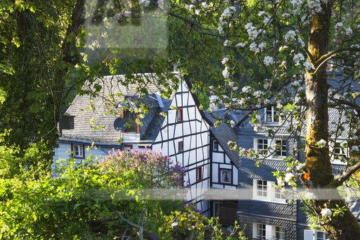 Germany, North Rhine-Westphalia, Eifel, Monschau, spring, apple blossom, Flieder blossom, historic typical half-timbered house and typical house with slates