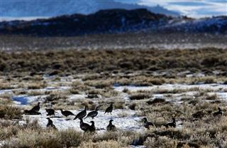 Oil Leases Sage Grouse