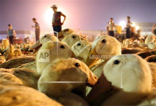 TopPho AP I  Guangxi China TPOHP People bought 200 thousand ducks in three days for the coming Chinese ghost festival in Liuzhou,Guangxi,China on 14th August, 20