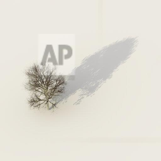 3D rendering, Bare winter tree with a shadow with summer foliage