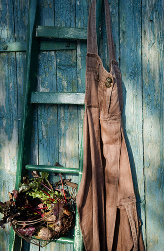 Wooden ladder and basket with beetroot, garden apron made of old linen pants