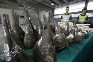 Hong Kong Vietnam Worst Wildlife Crime