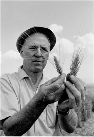 Borlaug