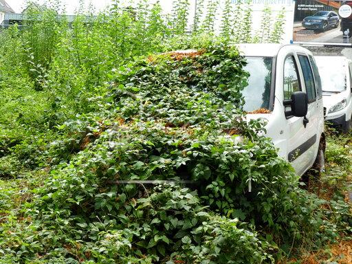 Car overgrown with plants