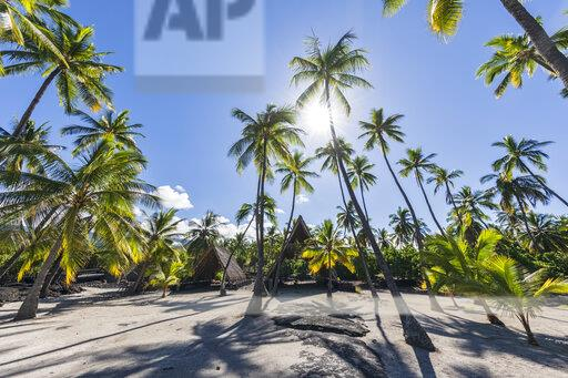 USA, Hawaii, Big Island, Pu'uhonua o Honaunau National Park, palms against the sun