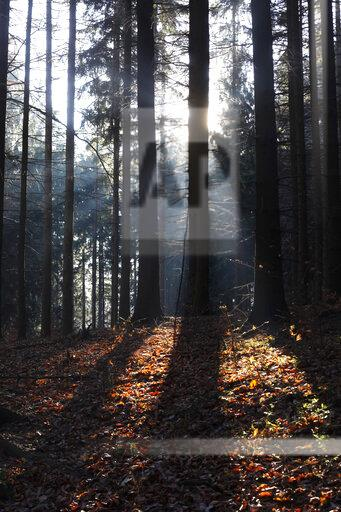 Germany, sunlight in the forest in autumn