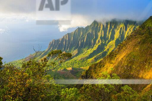 USA, Hawaii, Kalalau lookout over the Napali coast from the Kokee state park