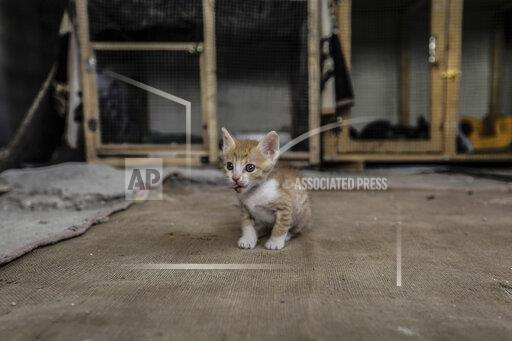 Animal rigts activist group rescues stray cats in Gaza