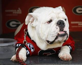 Georgia New Mascot Football